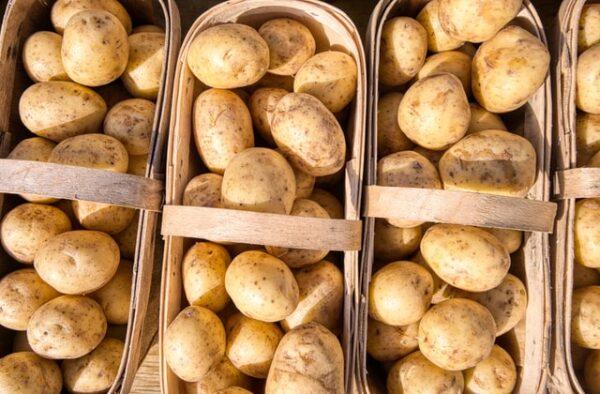 Einige Körbe wurden mit Kartoffeln befüllt