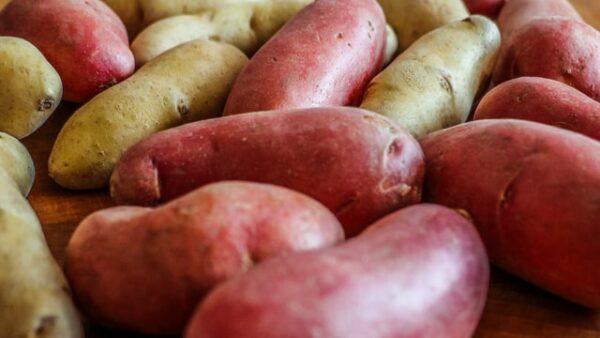 Rote und gelbe Kartoffeln liegen nebeneinander