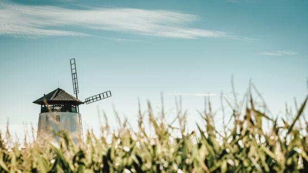Eine Mühle steht in Mitten eines Getreidefelds